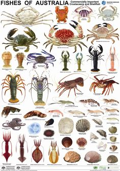 Poster-Crustacean-Species.jpg 1,134×1,620 pixels