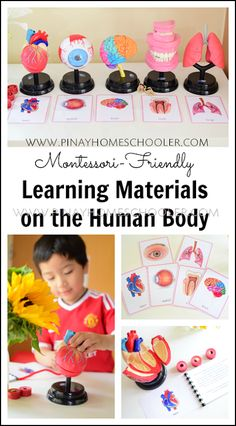 Montessori-friendly materials for the human body preschool human biology anatomy homeschool printables kidsactivities science 371335931772915305 Human Body Activities, Kids Learning Activities, Emotions Activities, Exercise Activities, Easter Activities, Spring Activities, Outdoor Activities, Kindergarten Science, Teaching Science