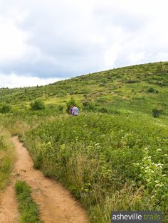 The Art Loeb Trail hikes a wildflower-covered bald at Black Balsam Knob near the Blue Ridge Parkway