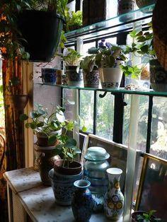 Art indoor plants hints-of-spring-to-dye