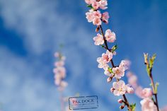 Peach tree in Cieza - Spain by PAkDocK @PAkDocK #xemtvhay