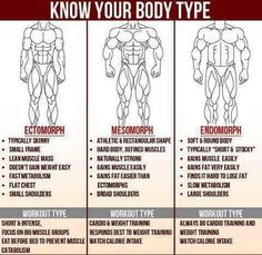 Ultimate Strength and Conditioning, this article shows you the different types of body types there are which are extremely important to know to start a workout program or to begin to train a client