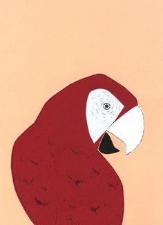 Safari - Parrots