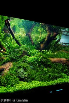 Freshwater Aquarium Plants, Tropical Freshwater Fish, Tropical Fish Aquarium, Saltwater Aquarium, Aquarium Fish Tank, Planted Aquarium, Fish Tanks, Saltwater Tank, Aquarium Landscape