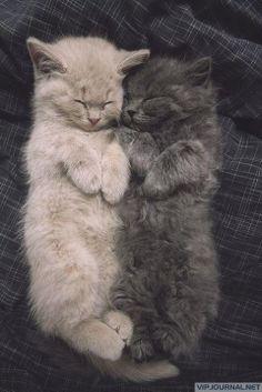 Best friends. - VipJournal.net