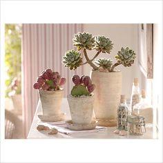 "pretty pic...cool cactus ""opuntia"""