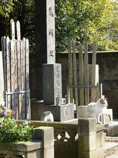 Cat in cemetery--Yanaka