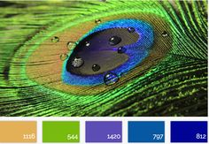 Peacock Palette - See this stunning color palette and rooms it inspired... at The Global Design Post   http://globaldesignpost.com/color/palette/the-peacock-palette/