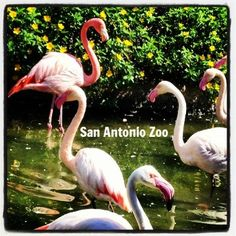 Fun facts about The San Antonio Zoo as it approaches its centennial