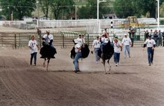 """The annual Ostrich Festival (formerly referred to as the Chandler Ostrich Festival) has been recognized as one of the """"Top 10 Unique Festi. Ostrich Bird, The Ostrich, Camelus, Ostriches, Flightless Bird, Running Away, Arizona, Dolores Park, Africa"""