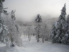 How UNREAL does the double black diamond trail at Okemo look?