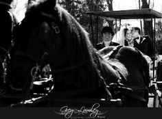 Horse and Carriage. Wedding cars and transport by Greg Lumley photographer. Wedding Cars, Cape Town South Africa, Professional Photographer, Transportation, Wedding Photography, Trucks, Horses, Vintage, Vespas