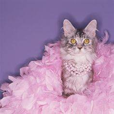 Lovely Cat with Pearls on Cat's Day 17 of February!!!!!!!!
