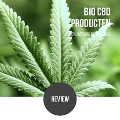 Review;  www.bio-cbdolie.nl  Gebruik de CBD olie nu ruim 2 weken voor mijn artrose en heb duidelijk minder pijn. Niet verwacht dat ik zo gauw zo veel resultaat zou hebben. Happy 😀👍