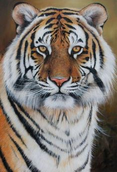 Gallery of Recently Sold Art by Pip McGarry - International Wildlife Artist painting big cats and other wildlife art Amazing Animals, Big Animals, Majestic Animals, Nature Animals, Tiger Pictures, Animal Pictures, Beautiful Cats, Animals Beautiful, Tiger Fotografie