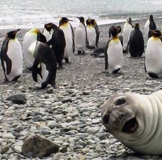 Seal photo boom