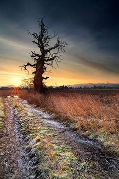 The Cromwell Tree Sunrise by stuartlow1202 via flickr Rumored to have been planted by Cromwell. Near Bridge of Earn, Perthshire, Scotland