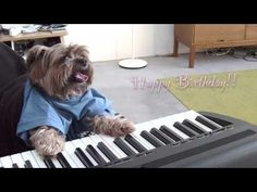 HAPPY BIRTHDAY Fun happy birthday song (tango rhythm) performed by piano-playing dogs for your special day.
