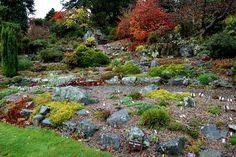 04 November 2010 - Northumberland Alpine Gardener's Diary - Gardeners' Diaries - Alpine Garden Society