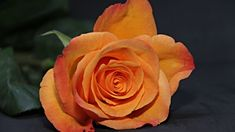 Orange Rose Close Up Wallpaper Rose Wallpaper, Wallpaper Iphone Cute, Brisket Chili, Turkey Glaze, Creole Seasoning, Rose Images, Soup Crocks, White Chicken Chili, Video Pink
