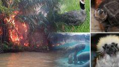 La fauna y la flora que el incendio en Chocó devoró