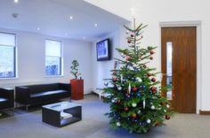 Silver and Red Christmas Tree to enhance red plant pots and red corporate logo Newbury UK