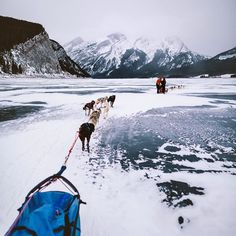 #tbt Dog sledding on Spray Lakes, Alberta Canada ❤️❤️