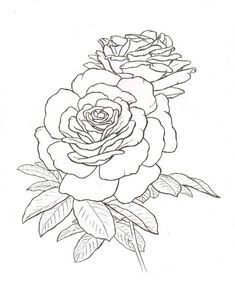 roses tattoo #roses #sketch #tattoo