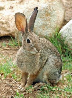 Wild Rabbit by ~photographyflower on deviantART