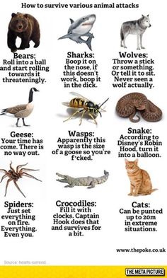 Ways To Survive Animal Attacks