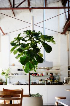 The Plant Society in Collingwood by Jason Chongue | Yellowtrace