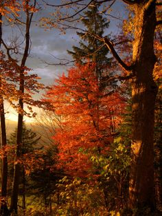 watcher-of-the-skies:  red autumn by ~MadMike27