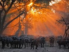 African Sunset by Noah Spencer Place - Wildlife Category. Picture: Noah Spencer/World Cup of Photography Contest Photography Competitions, Photography Contests, Travel Photography, Travel Around The World, Around The Worlds, African Sunset, Once In A Lifetime, Wild Ones, Africa Travel