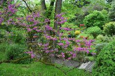 Le jardin botanique de Cluj est l'un des plus riche de Roumanie, surtout par ses serres et champs de fleurs. Champs, Plants, Travel, Gardens, Field Of Flowers, Botany, Tourism, Romania, Green Houses
