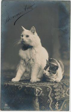 pc poezen bonne annee pm 1910 | Flickr: partage de photos! Vintage Kittens