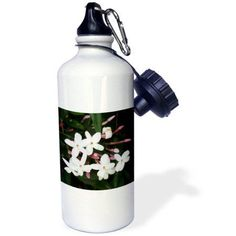 3dRose Divinity and Hope - white, flower, stamen, petals, jasmine, fragrant, blossom, Sports Water Bottle, 21oz