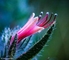 Flores para ti.....