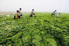 A little bit of wakame? – Qingdao, China