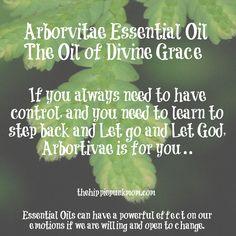 Arborvitae Essential Oil, the Oil of Divine Grace