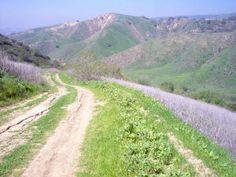 Diemer Trail loop Chino Hills State Park Hike Information - LocalHikes