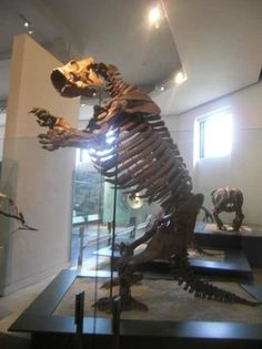 American Museum of Natural History, New York City Picture: The cave bear - Check out TripAdvisor members' candid photos and videos of American Museum of Natural History