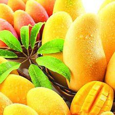 www.geewinexim.com/mango-pulp.php - Mango Pulp Exporters, Suppliers & Wholesalers in India. Two varieties of mangoes - Alphonso & Totapuri Mango.