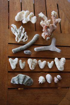 shellls at Maldives