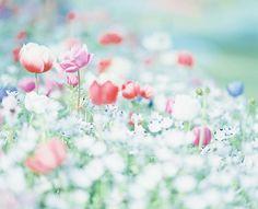 被写界深度 — floralls: byune**
