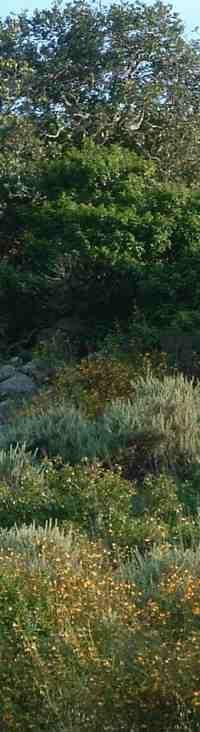 California coastal sage scrub community - grid24_6 California Native Plants, California Garden, Woodland Plants, Companion Planting, Habitats, Outdoor Spaces, Outdoor Gardens, Lawn, Coastal