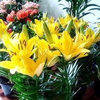 Vasos de flores a partir de R$ 15,00