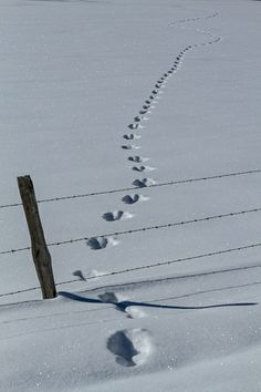 Making New Tracks | Flickr - Photo Sharing!