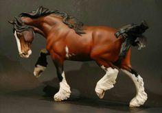 A bay Clydesdale Stallion named Apollo