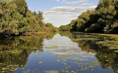 Danube Delta (Tulcea) - 2020 All You Need to Know Before You Go (with Photos) - Tulcea, Romania Travel Around The World, Around The Worlds, Danube Delta, Bucharest, Amazing Art, Awesome, Painting Inspiration, Trip Advisor, Cruise