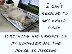 I can't respond to any emails today.   Something has crashed on my computer and the mouse is missing.